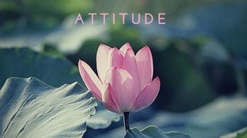 ATTITUDE (1)